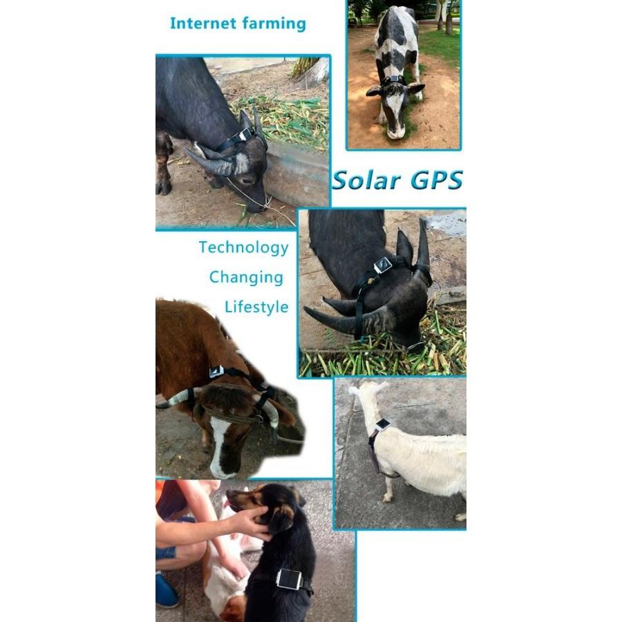 GPS solar barato localizador de ganado vacas animales